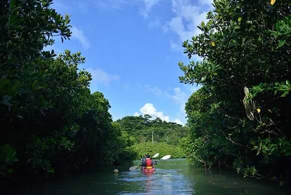 沖縄本島最大のヒルギ林の雄大な景色が広がる