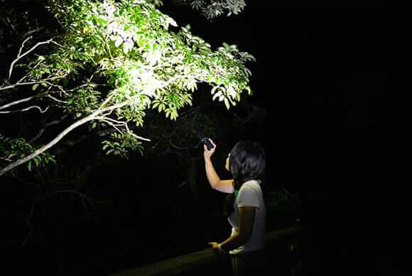懐中電灯で照らすと浮かび上がる森や木々の姿だけでも必見の美しさ