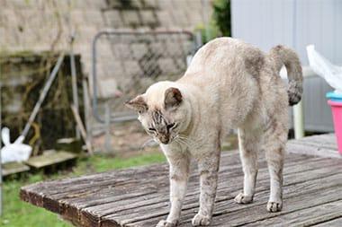 飼い猫ミーちゃん。自由きままに散歩するのが大好き
