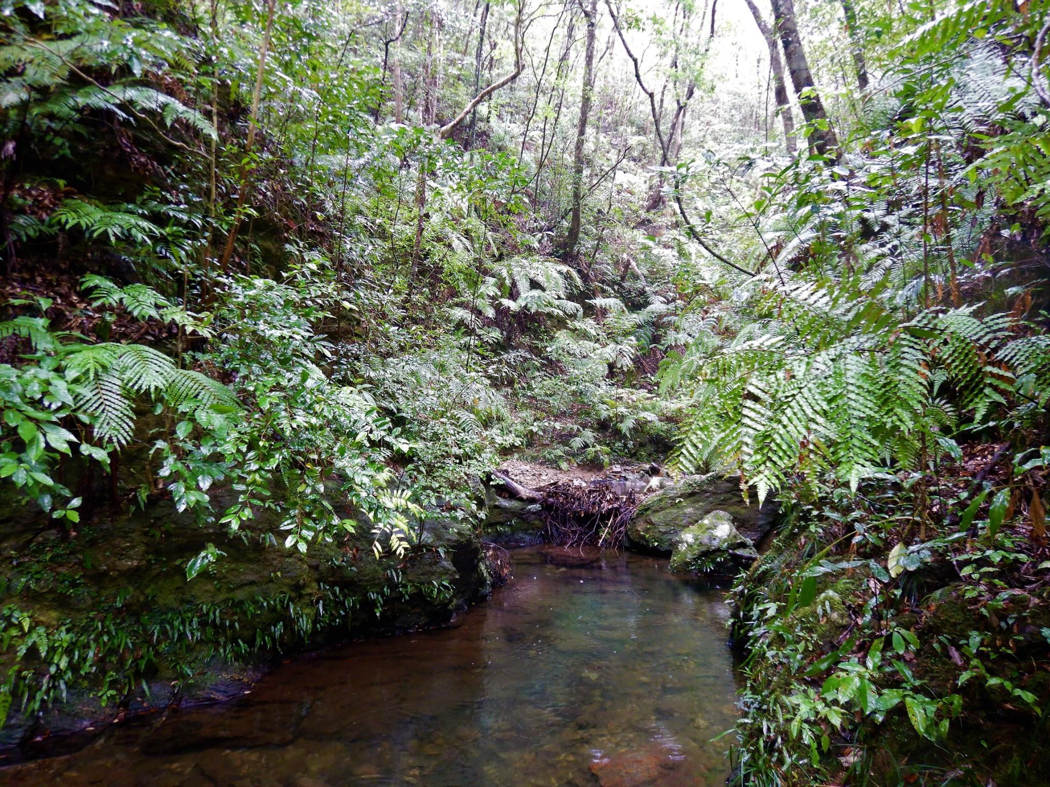 やんばるの自然豊かな森はやんばる国立公園になっています